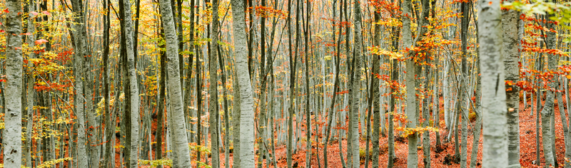 Big Data analysis lets us take all the tree data from an entire forest and simplify it to a few trees. Is Your N