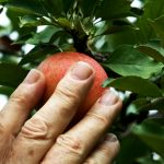 Falling Fruit collects and shares data for social good.